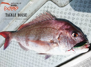 TACKLE HOUSE  BREAM JIG