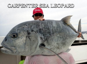 CARPENTER SEA LEOPARD SLP-80/33